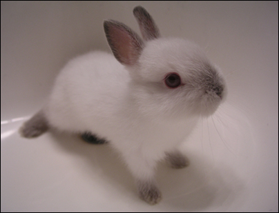 Sophia's bunny: her name is Skittles, this is what she looked like when she was a baby.